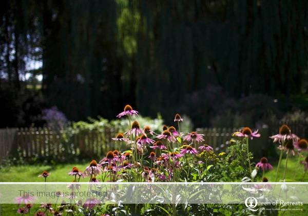 Flowers in the garden at Littleton Mill health retreat in Wiltshire