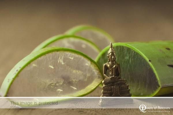 Sonnhof silver buddha & aloe vera