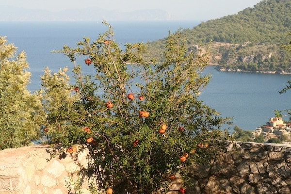 A pomegranate tree bordering the yoga platform at The Dionysus Estate in Turkey