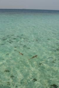 Maldives Constance Halaveli7
