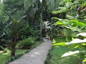 nicuesa costa rica walkway