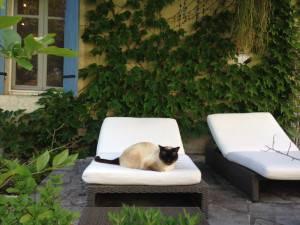 Les Passeroses France cat relaxing