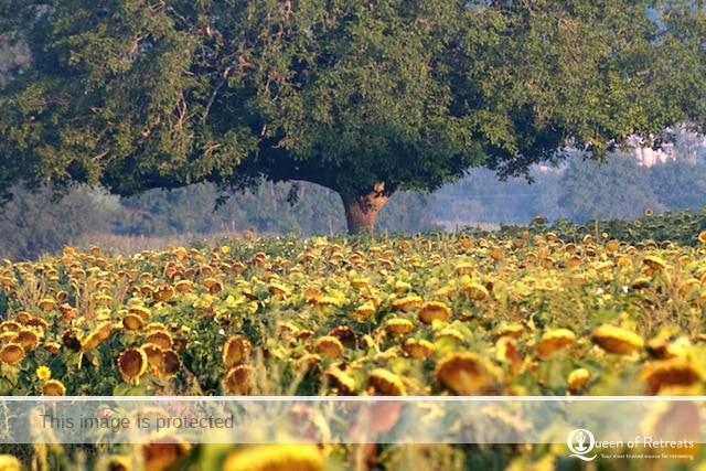 Les Passeroses France fields2