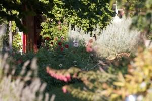 Les Passeroses France garden