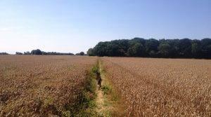 Green Farm relaxing retreat in England