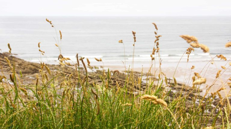 the pause life coaching retreat