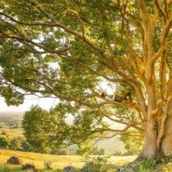 QoR generic man in tree rob-mulally-unsplash